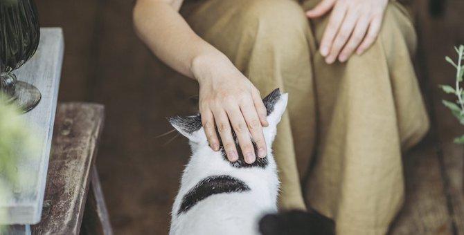 猫が付きまといたい♡飼い主の特徴5つ