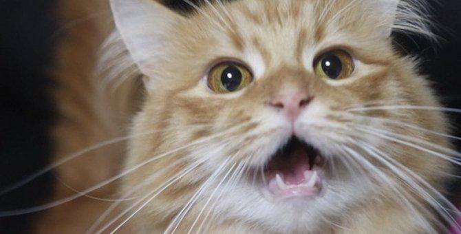 猫が「口パク鳴き」するのはなぜ?5つの理由