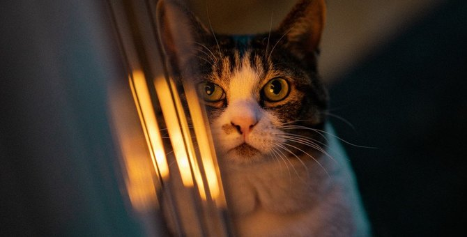 猫の寒さ対策!皆どうしてるの?調査してみた