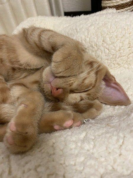 猫が『頭をくっつけてくる』時の心理3つ