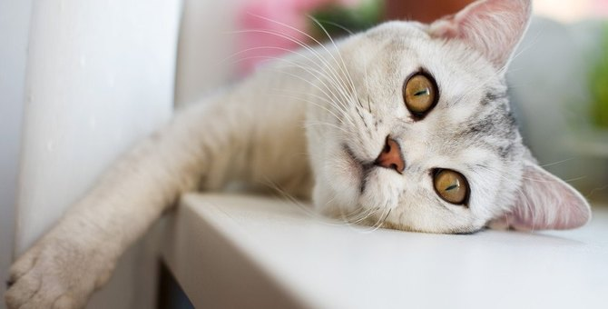 猫が退屈を感じている時にする仕草や行動4つ