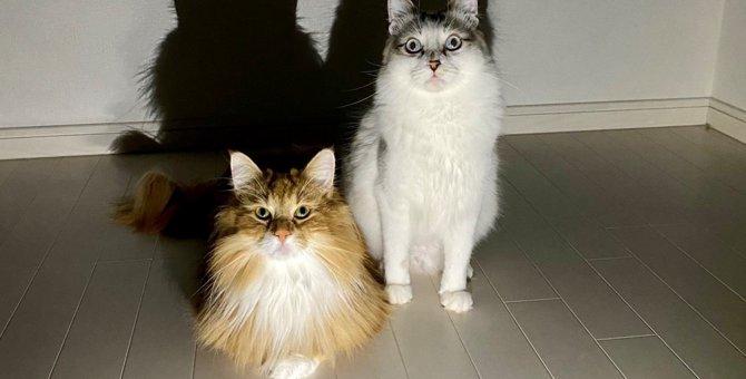 【話題】愛猫を動物病院へ連れて行った結果…『ヒエッ!』