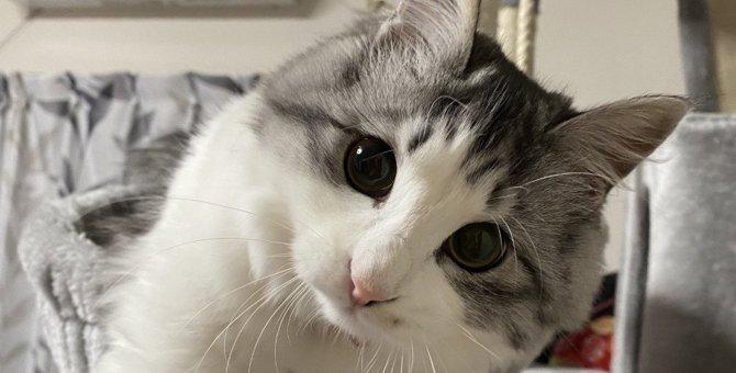 猫が『遊びたいニャ』とお誘いしてくる時の行動3つ