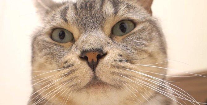 猫ちゃんの溢れる魅力にクローズアップ