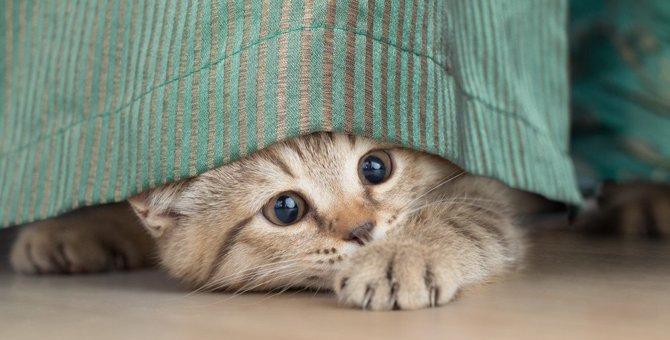 猫が室内で「隠れやすい」3つの場所!その理由と注意点とは?