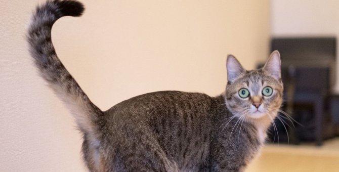 猫のしっぽは何のためにある?しっぽの持つ4つの役割