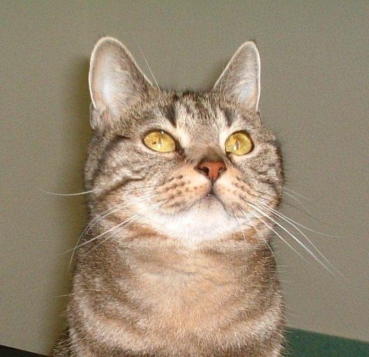 猫の目の不思議な魅力