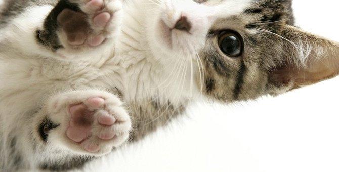猫を下から見た画像6選!香箱座りが人気な理由