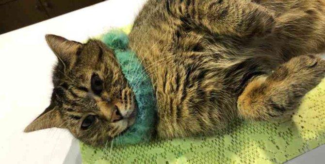 成猫を続けて保護…捨てられても人懐こい姿から知るべき現実とは?