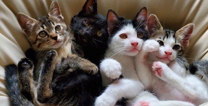 猫が「人間の子供」に優しい3つの理由