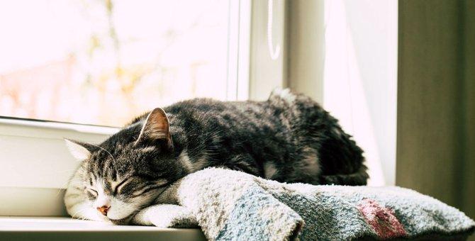 猫の『ストレスレベル』がわかるチェック項目5つ!飼い主がすべき対策方法とは?