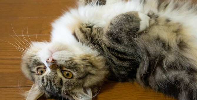 遊んでいて激突!?猫が頭をぶつけたときに確認すべき3つのこと