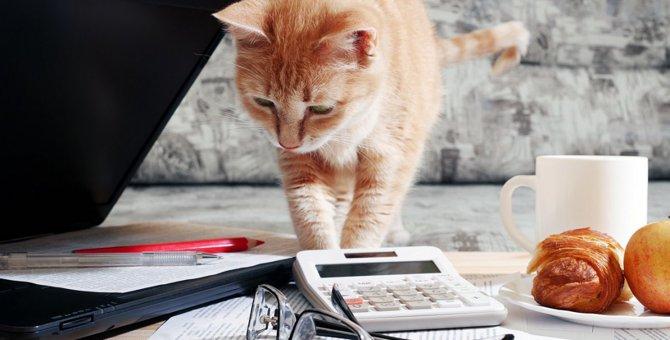 猫が孤独を感じている5つの兆候