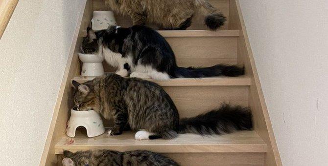 猫が『空腹』を知らせているときのサイン6つ