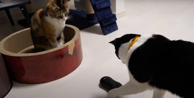 思わず釘付け!くるくる回る黒い物体に興味津々な猫ちゃん