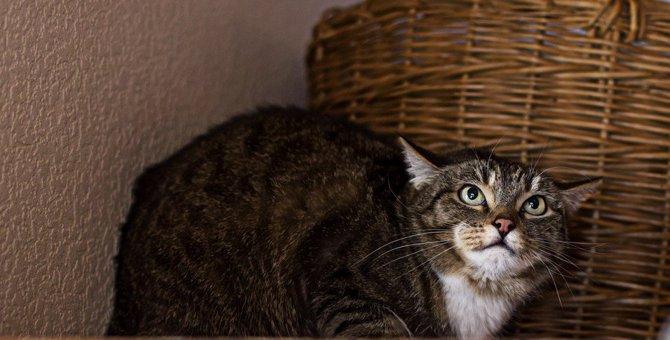猫に恐怖を与えるダメな飼い方8選