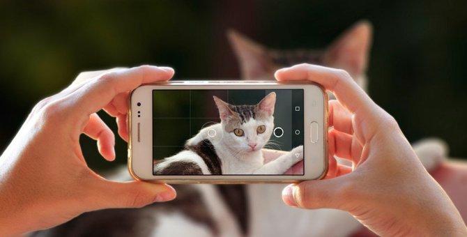 猫の飼い主あるある!他人には見せられない『猫バカ行動』5つ
