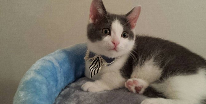 猫の『分離不安症』を引き起こしやすい飼い主の特徴3つ
