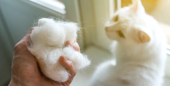猫の毛玉はどうしてできるの?お手入れと予防する方法