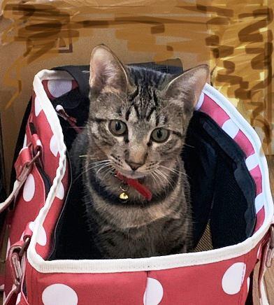 猫にキャリーを好きになってもらう方法