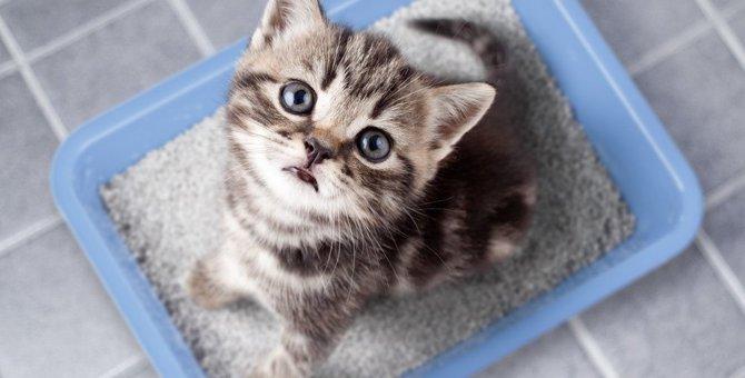 迷える飼い主必見!猫の『トイレトレーニング』を成功に導くポイント4つ