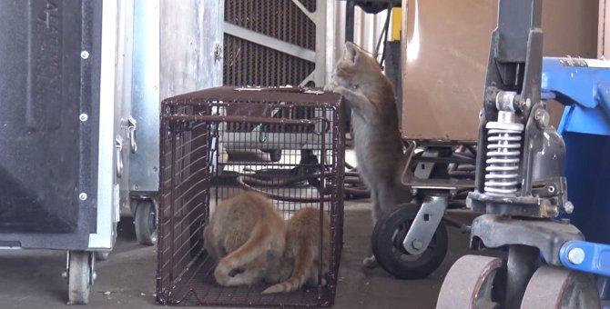 危険な工場に住みついた親子猫、保護され安全な施設へ