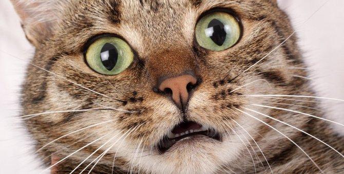猫に『恐怖心』を与える絶対NGな叱り方5選