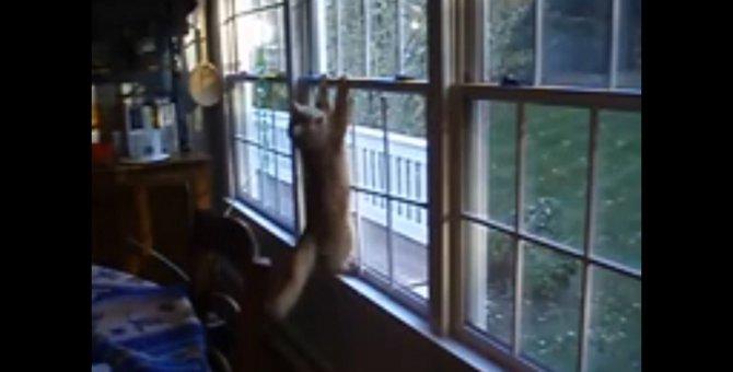 宙ぶらりんな猫ちゃん、ピンチを乗り切れるか?!