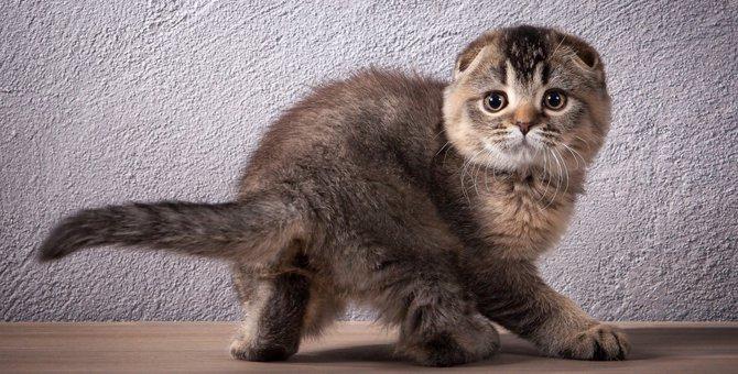 猫の尻尾が震える8つの理由