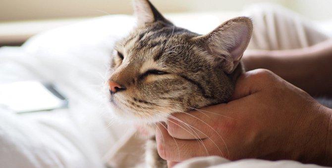 猫が『膝に乗りたくなる人』に共通すること4つ