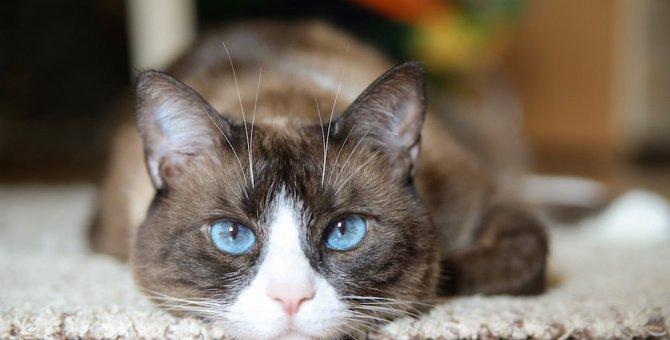 実は猫って近視?猫の視力について
