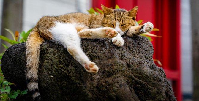 《仙厳園》桜島の絶景も目の前に! ぜったい訪れたい猫神神社!