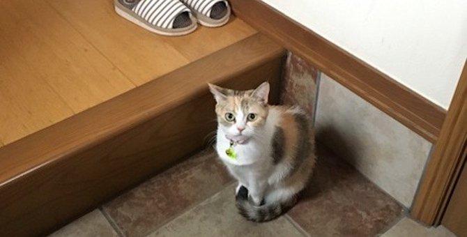 出かける時に猫が『お見送り』してくれる理由4つ
