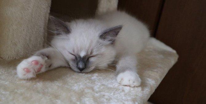 寒い季節!猫と一緒に寝たい願望を叶える3つの秘策