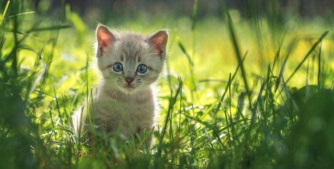 野良猫の子猫の生存率はどれくらい?保護した時にする事