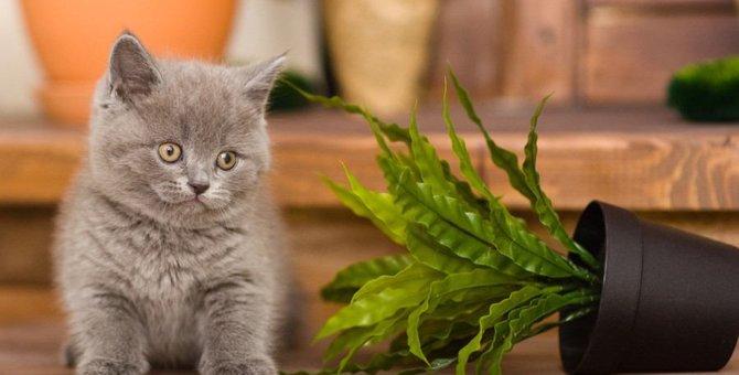 猫が『拗ねたとき』にみせる行動3選
