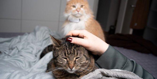 猫が『裏切られた』と絶望してしまうNG行為4選