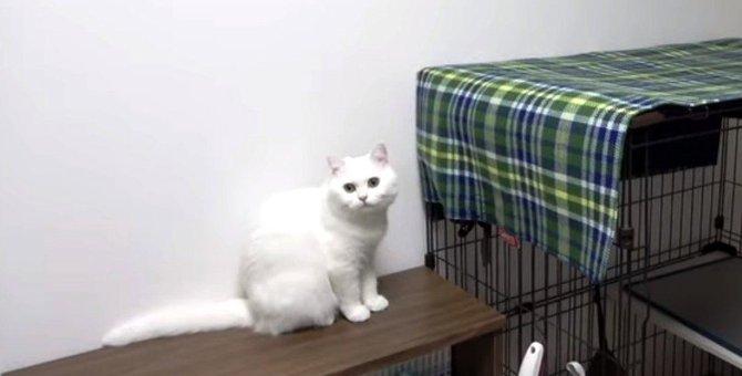 愛猫ちゃんの為に過ごし易そうな場所を進んで提供!