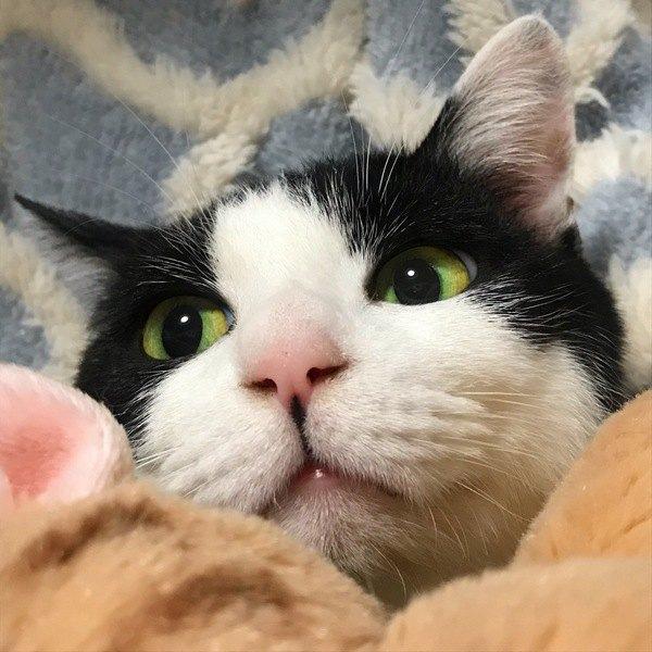 猫が鼻を『ヒクヒク』させる意味2つ