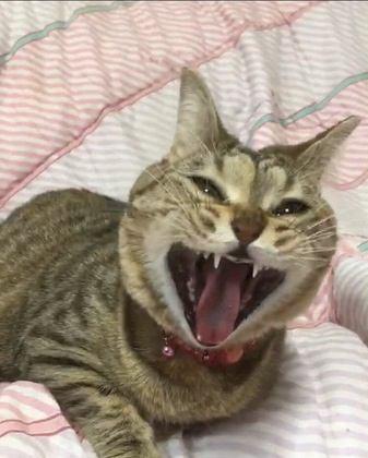 猫に口腔ケアは必要か?