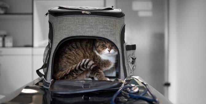 病院嫌いな猫あるある4つ