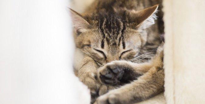 猫がよくいるお気に入りスポットの特徴4つ