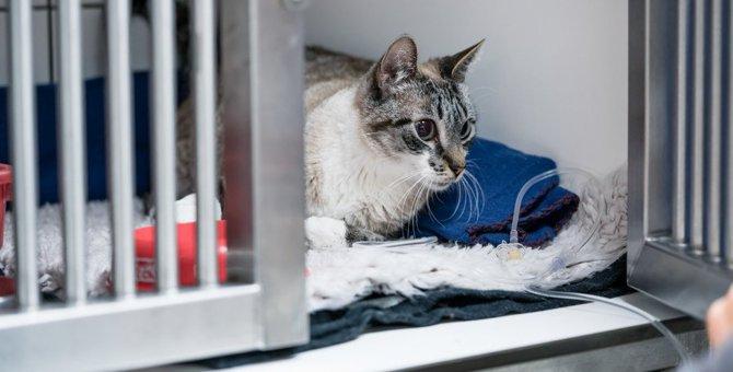 猫の死に直結する恐ろしい病気4つ