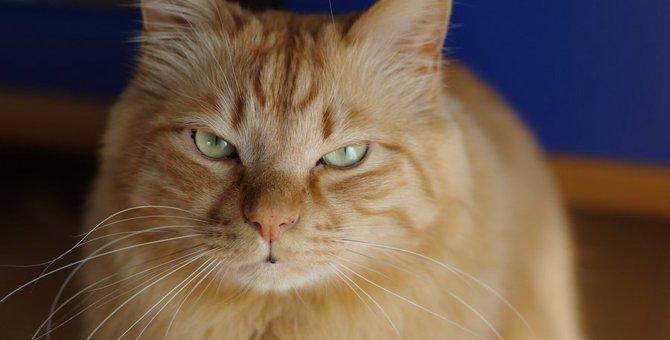 猫にしてはいけない『間違ったNGお手入れ』6選