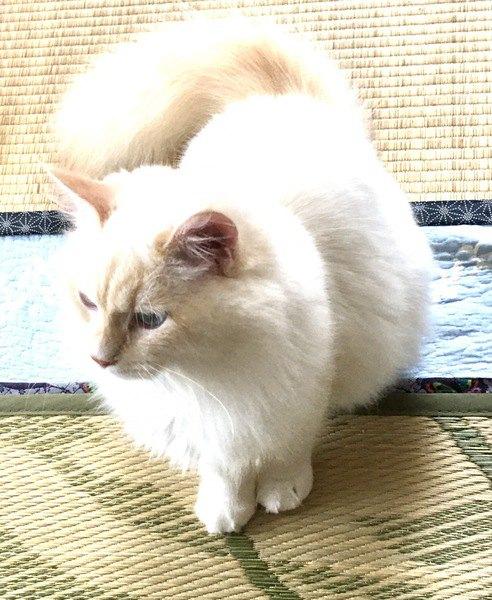 猫の『クーラー病』に気を付けて!症状3つ