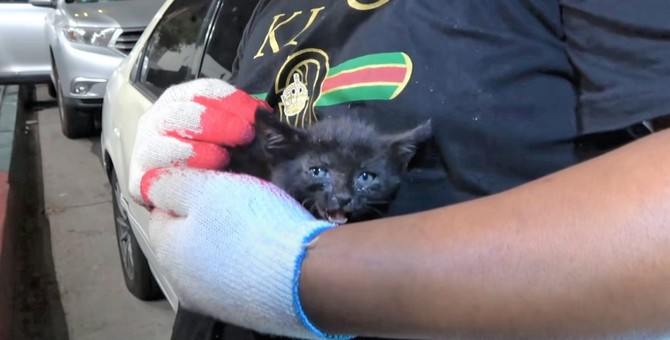 大声を張り上げて、自分の命を救った子猫。幸せになってね。