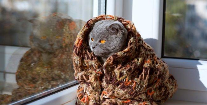 猫に暖房を使う際の適温と注意点について