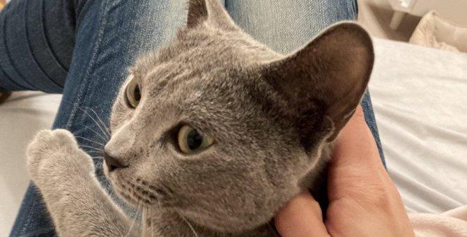 猫の『知能』は何歳くらい?人間や犬との違いと特徴を解説!