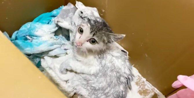 ネズミ捕りにかかって汚れまみれの子猫…美猫に大変身!