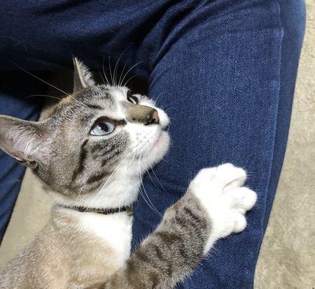 猫が飼い主に依存しすぎている時の仕草や行動5つ
